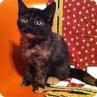 Adopt A Pet :: Rosie - Chicago, IL