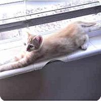 Adopt A Pet :: Foxy - Washington Terrace, UT