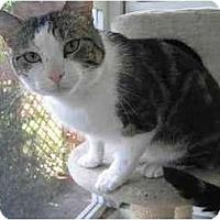 Adopt A Pet :: Mooch - Portland, OR