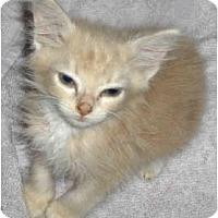 Adopt A Pet :: Temple - Richmond, VA
