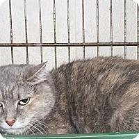 Adopt A Pet :: Pooky - Chesapeake, VA