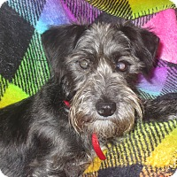 Adopt A Pet :: Chula - Monroe, NC