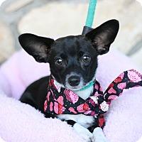 Adopt A Pet :: Mykee - Canoga Park, CA