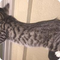 Adopt A Pet :: Sparrow - Dallas, TX