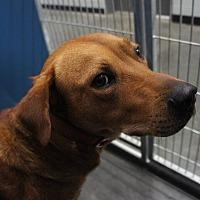Adopt A Pet :: Jake - Franklinville, NJ