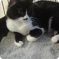 Adopt A Pet :: Franz Listz - Scottsdale, AZ