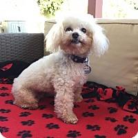Adopt A Pet :: Khloe - Placentia, CA
