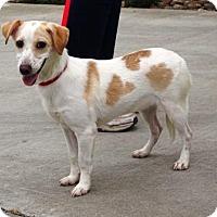 Adopt A Pet :: Daisy Mae - Lathrop, CA