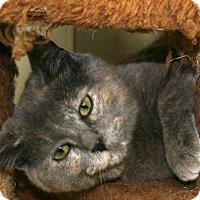 Adopt A Pet :: Owl - Republic, WA