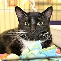 Adopt A Pet :: Keeton - Rochester, MN