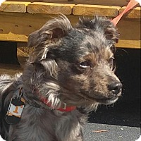 Adopt A Pet :: Chester - Spring Valley, NY