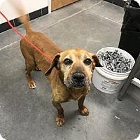 Adopt A Pet :: Rango - Farmington, NM