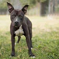 Adopt A Pet :: SANTA - Los Angeles, CA