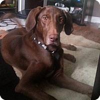 Adopt A Pet :: Coco - Hamilton, ON