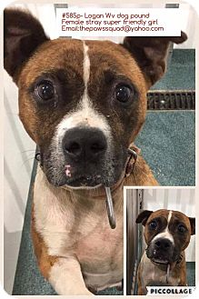 Boxer Mix Dog for adoption in Chapmanville, West Virginia - Gennifer
