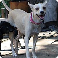 Adopt A Pet :: Nellie - Dallas, TX