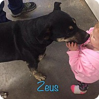 Adopt A Pet :: Zeus - Aurora, CO
