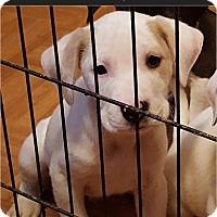 Adopt A Pet :: Conan - Bernardston, MA