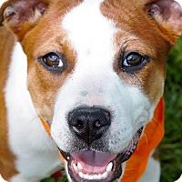 Adopt A Pet :: Libby meet me 4/21 - Manchester, CT