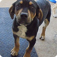 Adopt A Pet :: Sugar - Jamestown, TN