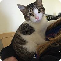 Adopt A Pet :: Chrissy - Waller, TX
