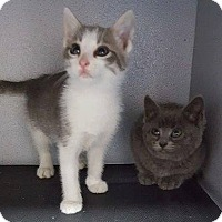 Adopt A Pet :: Jessie - Mount Sterling, KY