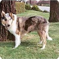 Adopt A Pet :: Bubba - San Diego, CA