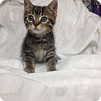 Adopt A Pet :: Lord Business - Maywood, NJ