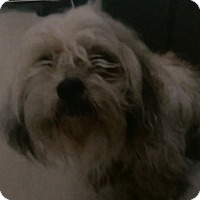 Adopt A Pet :: Jinx ADOPTION PENDING!! - Antioch, IL