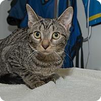 Adopt A Pet :: Chelsea - New York, NY
