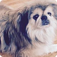 Adopt A Pet :: CARE BEAR - SO CALIF, CA