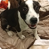 Adopt A Pet :: lucy - eagle point, OR