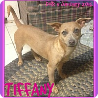 Adopt A Pet :: TIFFANY - White River Junction, VT