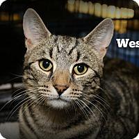 Adopt A Pet :: Wesley - Springfield, PA