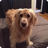 Adopt A Pet :: Sadie - Surrey, BC