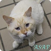 Adopt A Pet :: ASAP - Bradenton, FL