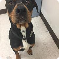 Adopt A Pet :: Kia - Marion, OH