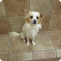 Adopt A Pet :: Spock *Petsmart GB* - Appleton, WI