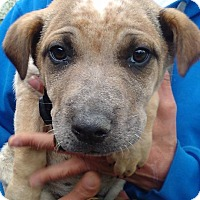 Adopt A Pet :: Grayson - Kendall, NY