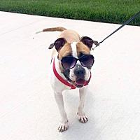 Adopt A Pet :: Christopher - Columbus, OH
