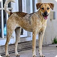 Adopt A Pet :: Nenya - hollywood, FL
