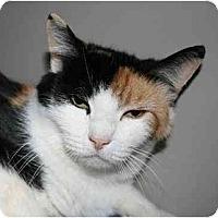 Calico Cat for adoption in Napa, California - Autumn