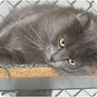 Adopt A Pet :: Destini - Anchorage, AK