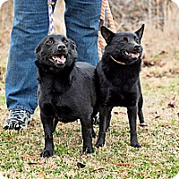 Adopt A Pet :: Josie - Braintree, MA