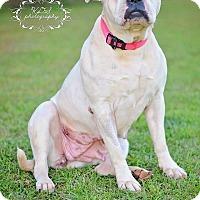 Adopt A Pet :: Geneis - Fort Valley, GA