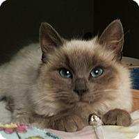 Adopt A Pet :: Tuscany Blu - Columbus, OH