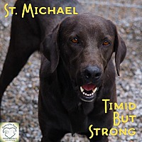 Labrador Retriever Mix Dog for adoption in Washburn, Missouri - St. Michael