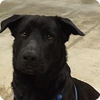 Adopt A Pet :: Buddy - Swanzey, NH