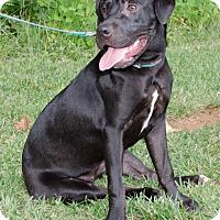 Adopt A Pet :: Maggie - Midlothian, VA