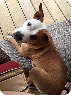 Pit Bull Terrier Mix Dog for adoption in Woodstock, Georgia - Madeline (Maddie)